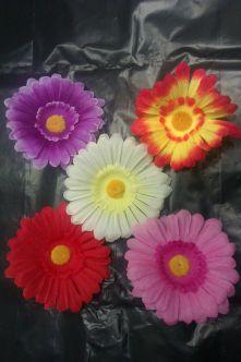 Хавайска Шнола  - Различни цветове