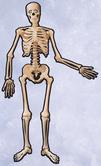 Декорация - Скелет  135см.